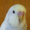 electricbudgie